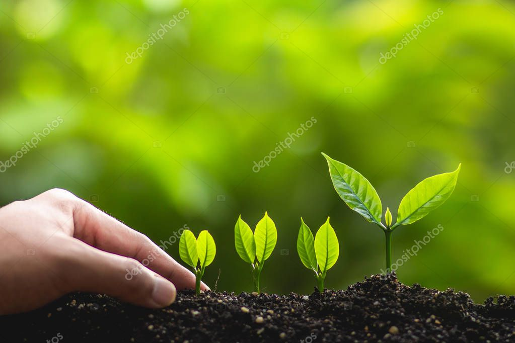 Growing trees leader trees Planting trees Save world concept