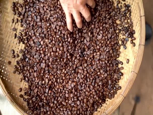 Arabica Coffee bean in farmer hand