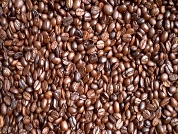 Arabica kávé bab, a gazda-kezében