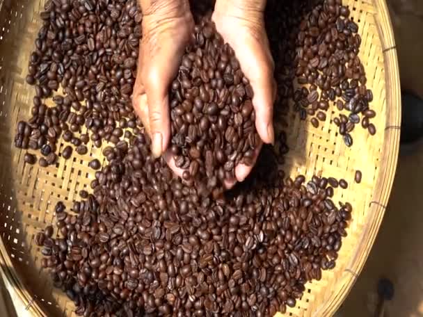 Arabica Coffee bean v rukou farmář