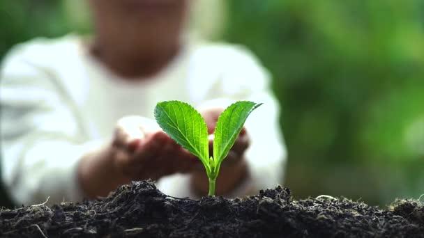 Zasaď strom zalévání stromu kávovníku v přírodě