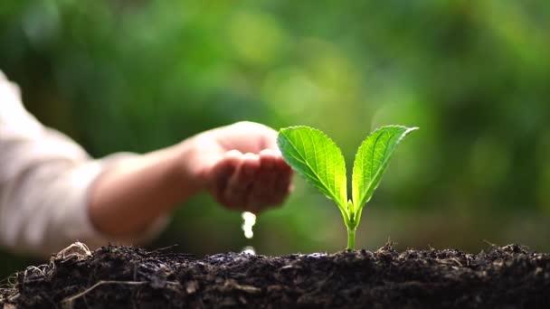 dvě ruce, pěstování mladých zelených rostlin