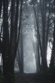 Forest Rain and fog On the Mountain