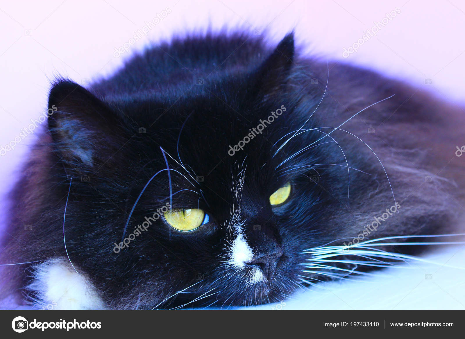 Μαύρο ροζ μουνί εικόνες