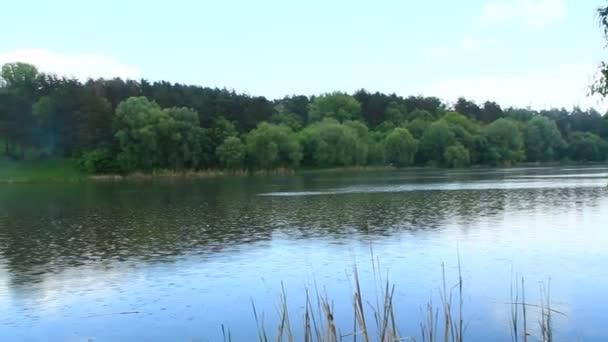 Letní krajina s zeleného lesa a řeky. Vodní hladiny. Lesní krajina