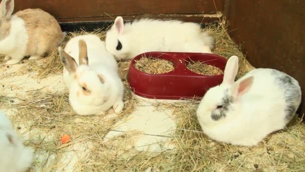 Brut der kleine Junge Kaninchen im Zoo amüsant. Weiße Kaninchen. Gruppe von hausnagetiere