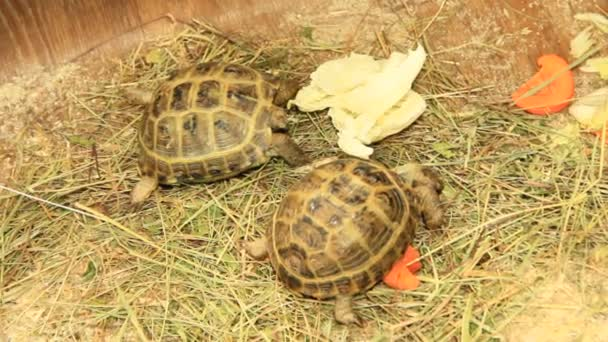 Small turtles living in zoo. Slow animals. Turtle breeding