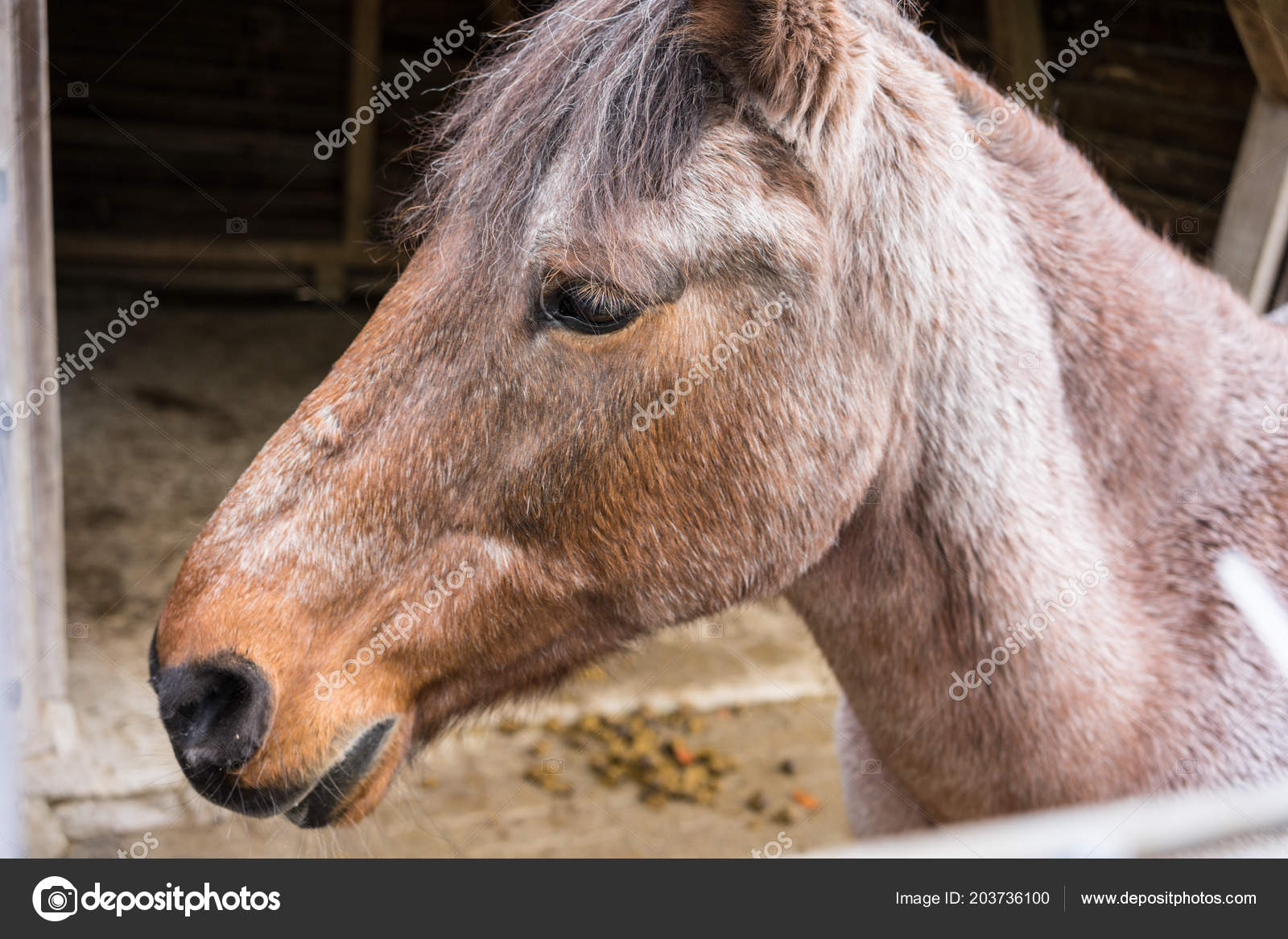 Images Brown Horse Face Brown Horse Face Side View Close Barn Stock Photo C Designosaurus 203736100