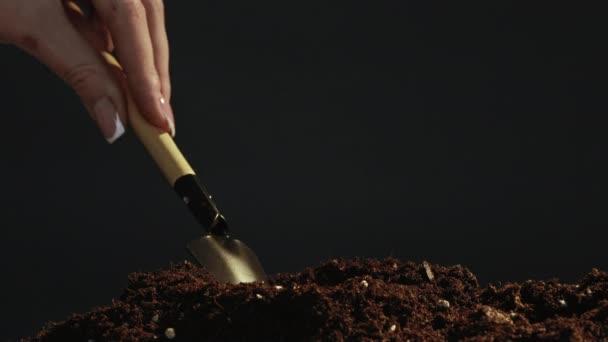 obdělávání stromů ruce rostlina zelená klíčková půda