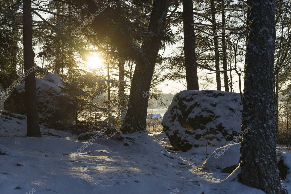 Beautiful nature and landscape photo of Swedish winter forest