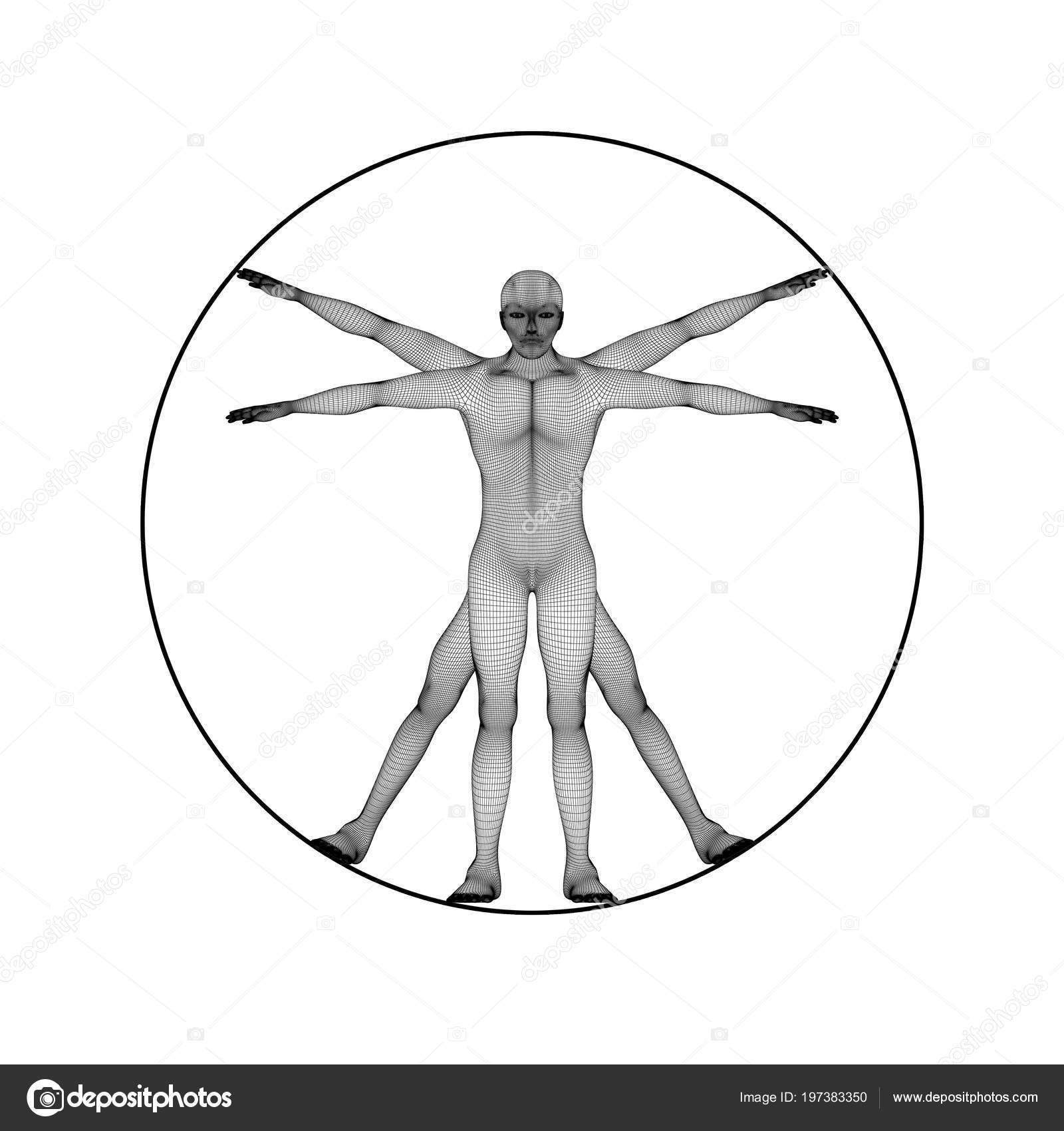 Una Figura Humana Como Leonard Vinci Hombre Virtual Concepto ...