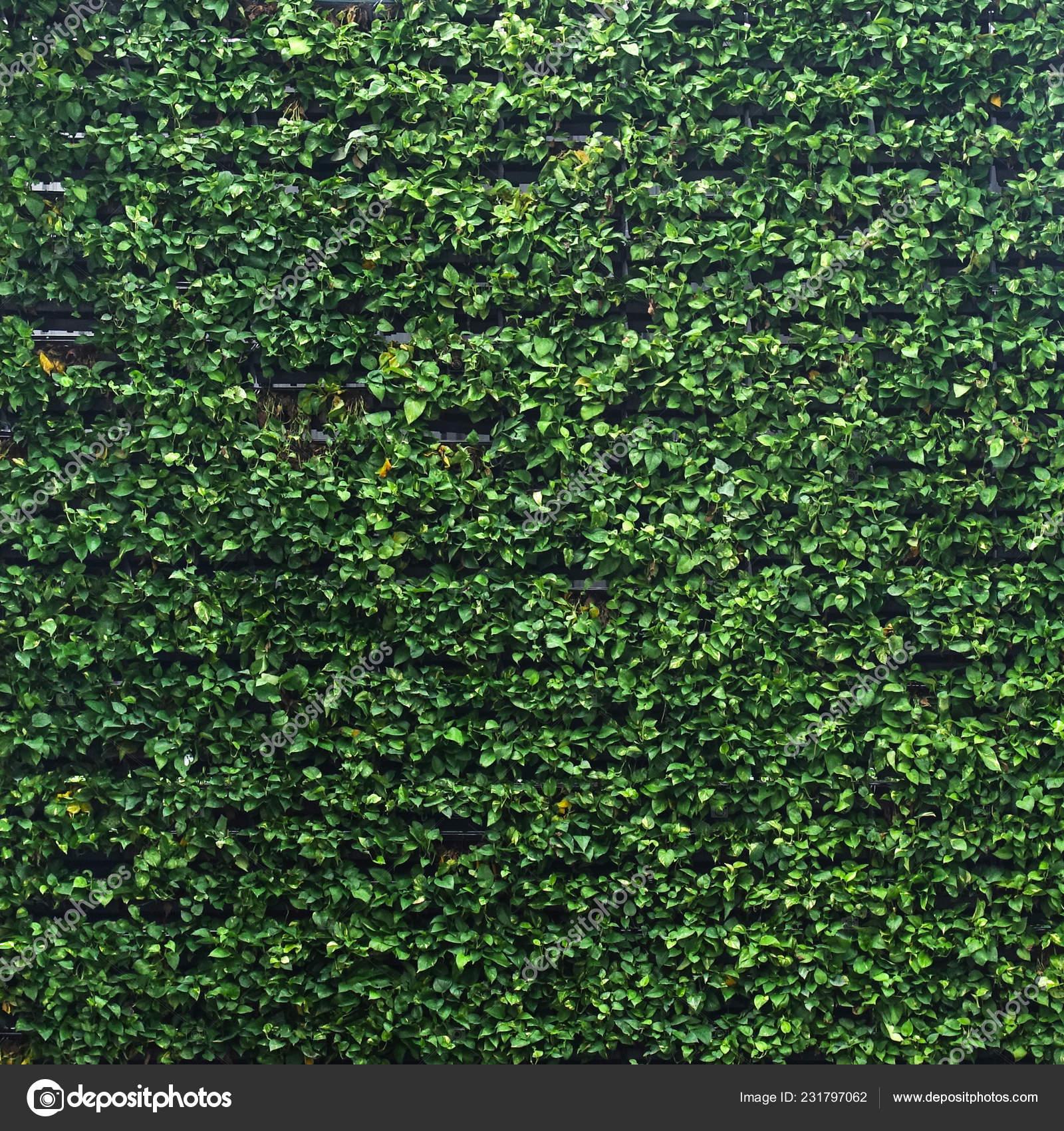 Vertical Garden Lush Green Wall Pattern Surface Texture Close