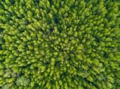 Letecký pohled shora na svěží zelené stromy v tropických fores