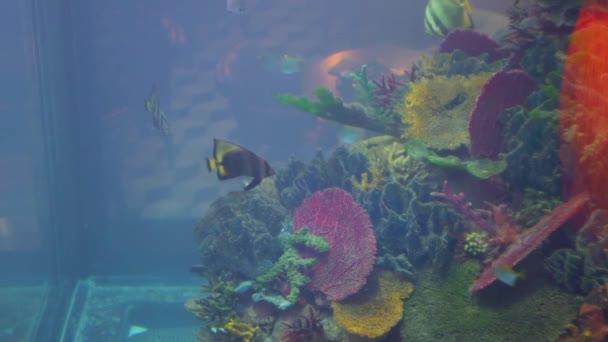 Fish swimming in the aquarium. Beautiful fish oceanarium