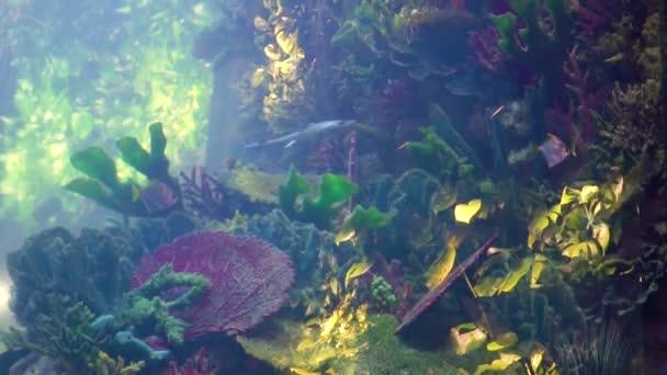 Fish swimming in the aquarium
