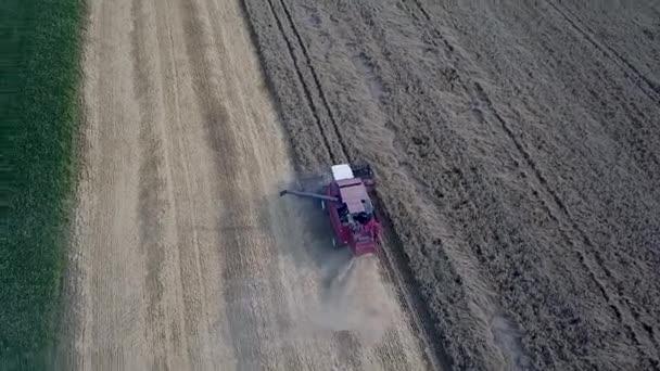 Sklízáci pracující v terénu. Letecký pohled na moderní červenou kombinaci sklizeň pšenice na poli