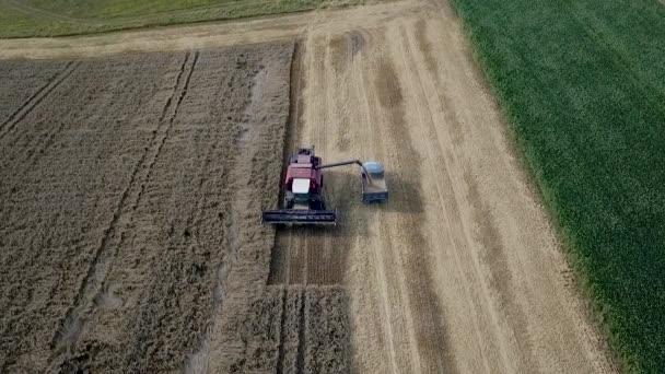 Kombinovat a sklízí pšenici v zemědělském stroji. Sklízáci pracující v terénu