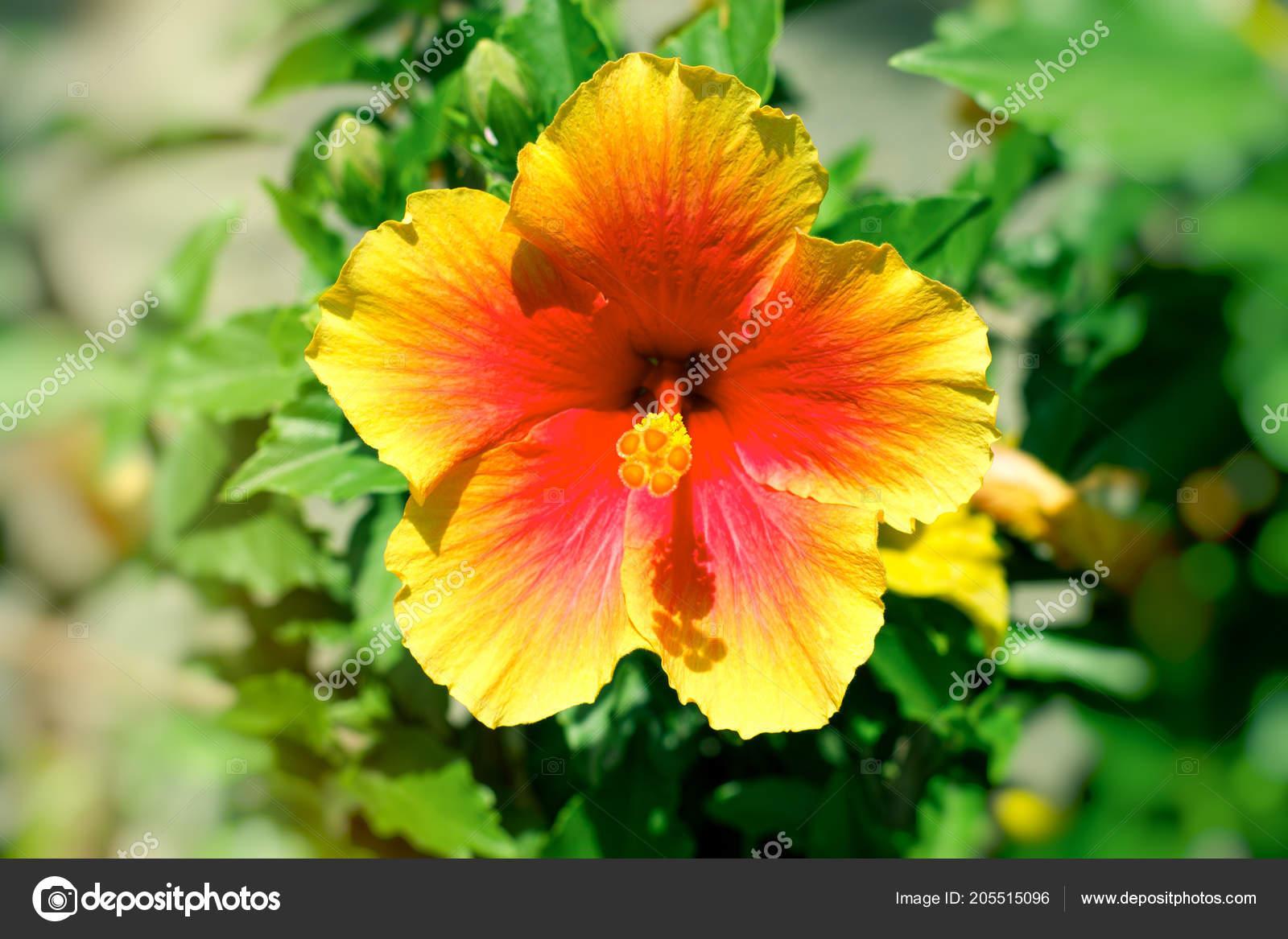 Schöne Blume Meinem Garten Blume Die Durch Sonnenlicht Beleuchtet