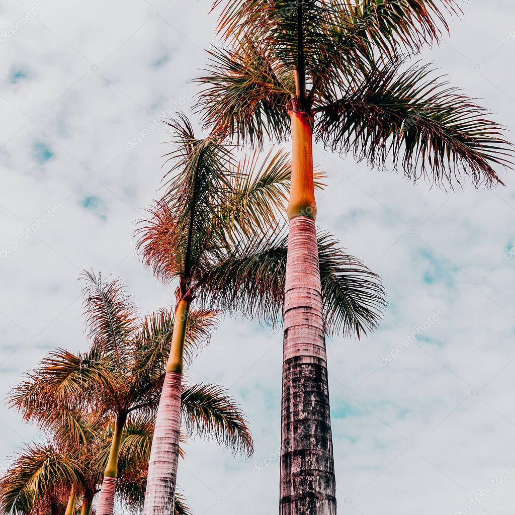 Tropical beach fashion mood. Palm. Canary island