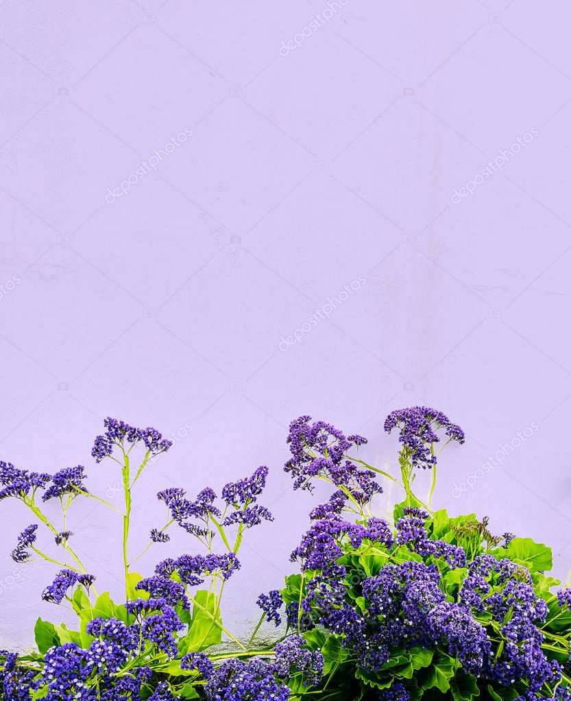 Minimal purple mood.  Flowers art