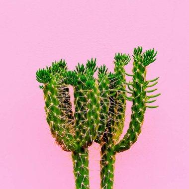 Cactus fashion art minimal. Plants on pink concept