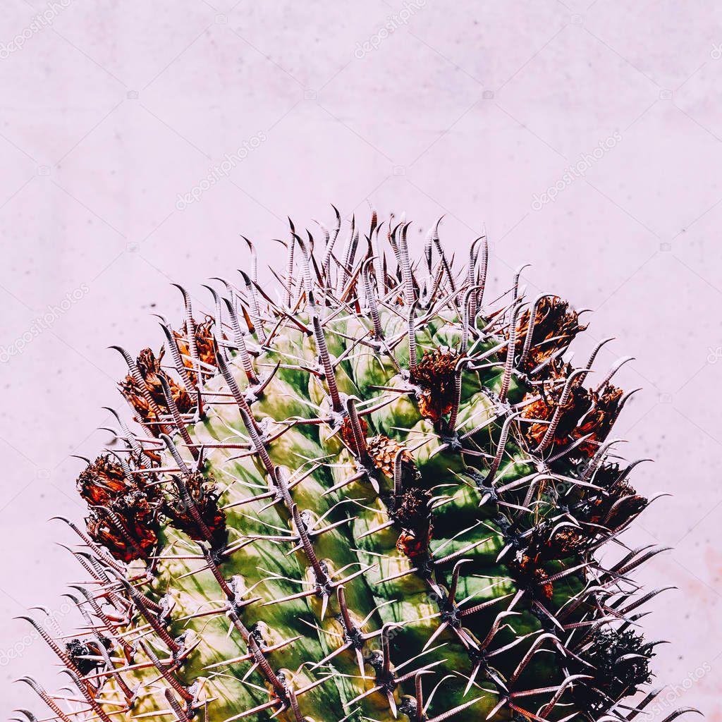 Cacti in the city. Cactus lover Minimalism trend