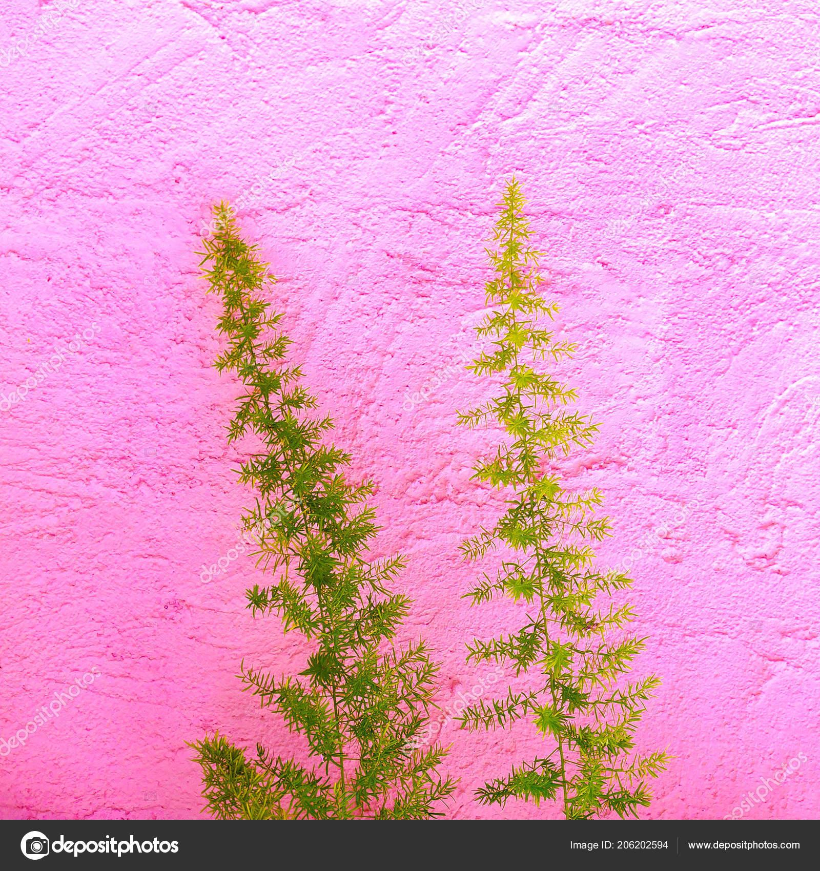 Minimális Növények Rózsaszín Fogalom Trópusi Zöld Rózsaszín Fal — Stock Fotó 8fcd758e49