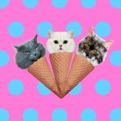 Cats ice cream mix. Contemporary art collage. Funny Fast food project
