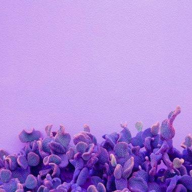 Creative colours concept. Plant lovers. Minimal  Cactus art . Pu