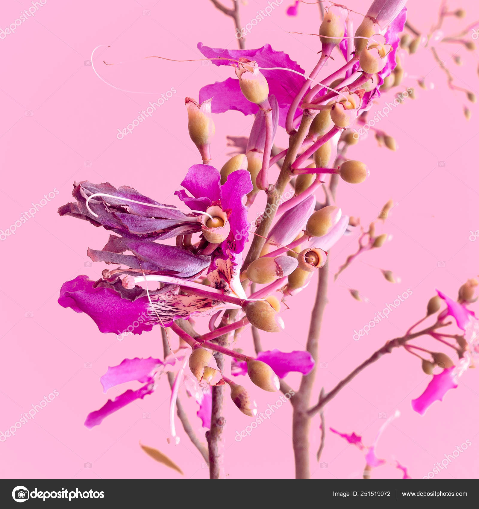 Piante Sul Concetto Di Moda Rosa Fiori Su Sfondo Rosa Foto Stock