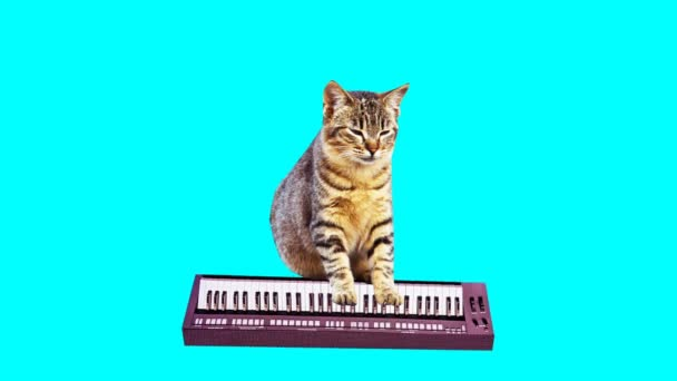 Animation minimale GIF-Kunst. Kitty spielt auf Synthesizer