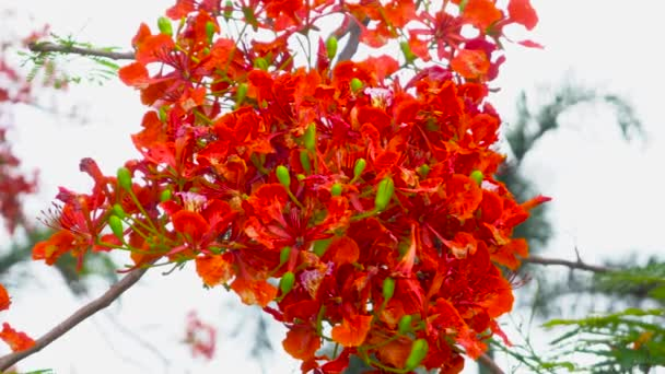 Beautiful Nature Close up Flower. 4K UHD Video clip