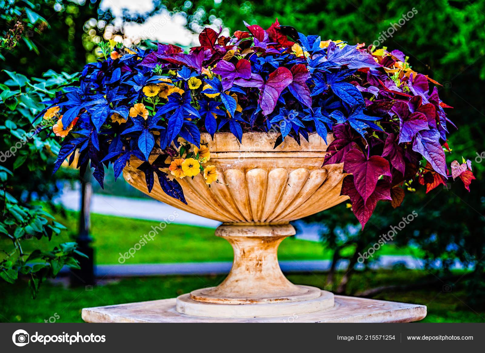 Decorative Park Urn Bowl Filled Beautiful Colorful Blue Violet