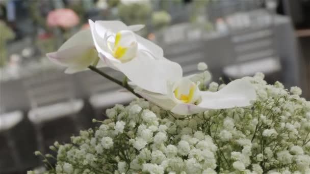 Bílá orchideje design