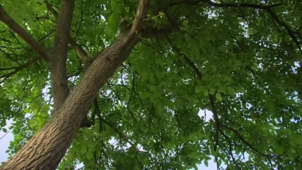 nagy fa zöld levelekkel