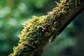 Fotografie Schnecke auf AST im Lorbeerwald, Anaga Landschaftspark, Biosphärenreservat, Teneriffa, Spanien