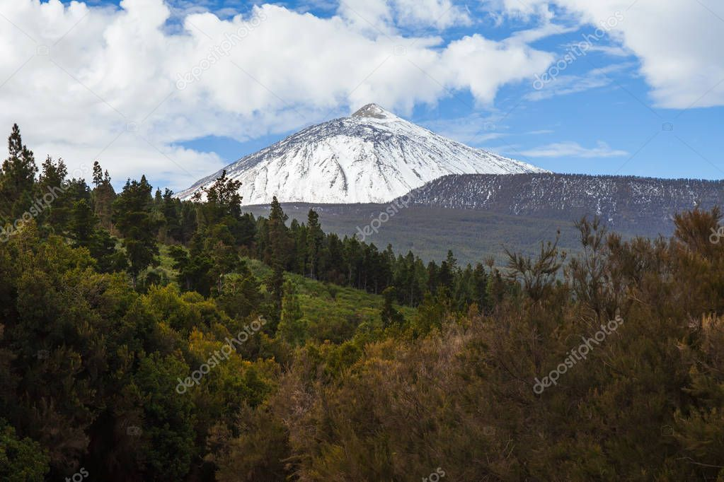 Scenic view of snow volcano mountain El Teide and coniferous forest in winter. Nature landscape background