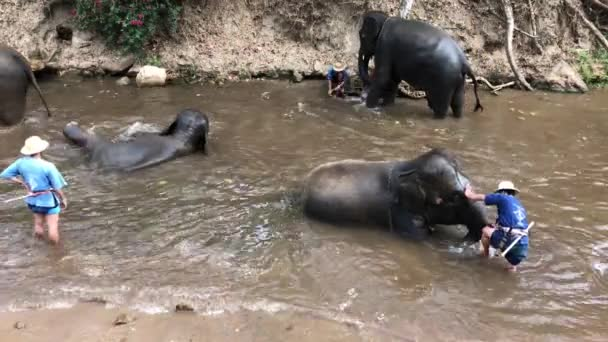 elephant-trainer-head-in-butt-video-live-stream-shemale-porn-videos