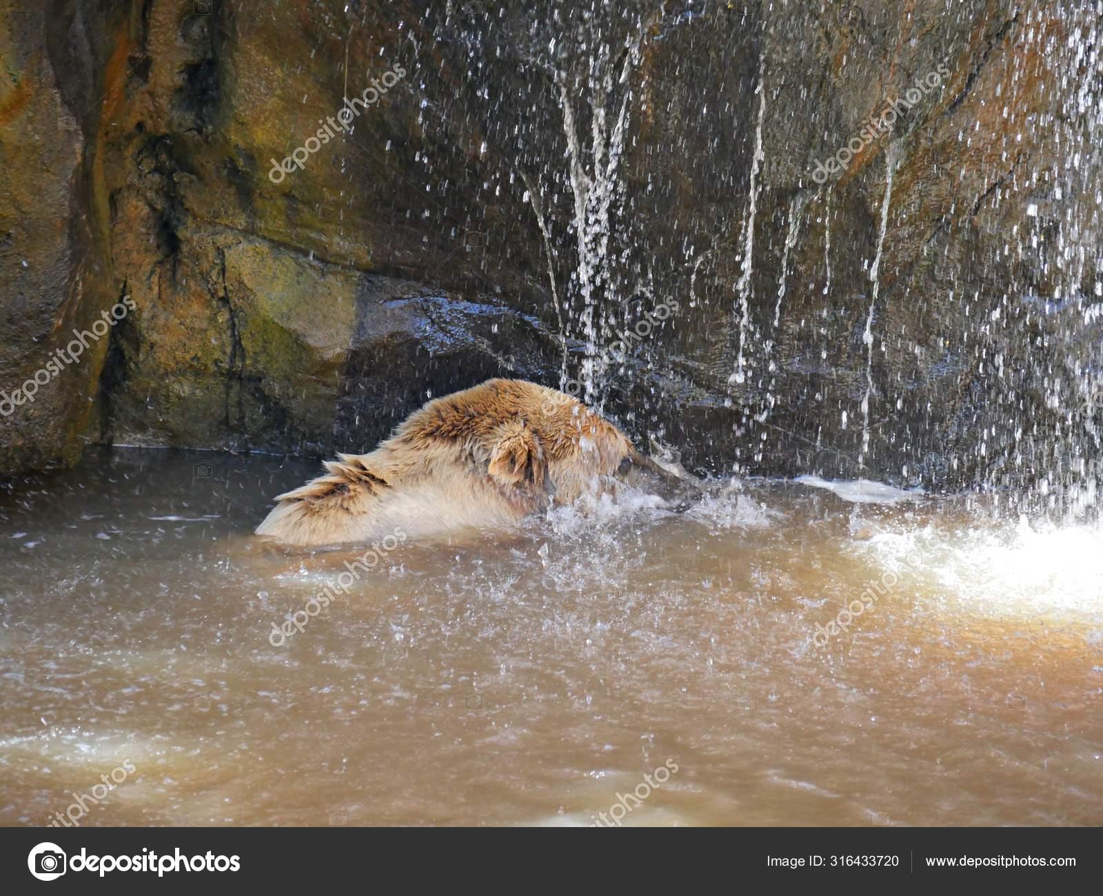 пластиковой картинки медведь под душем спортивное сиденье