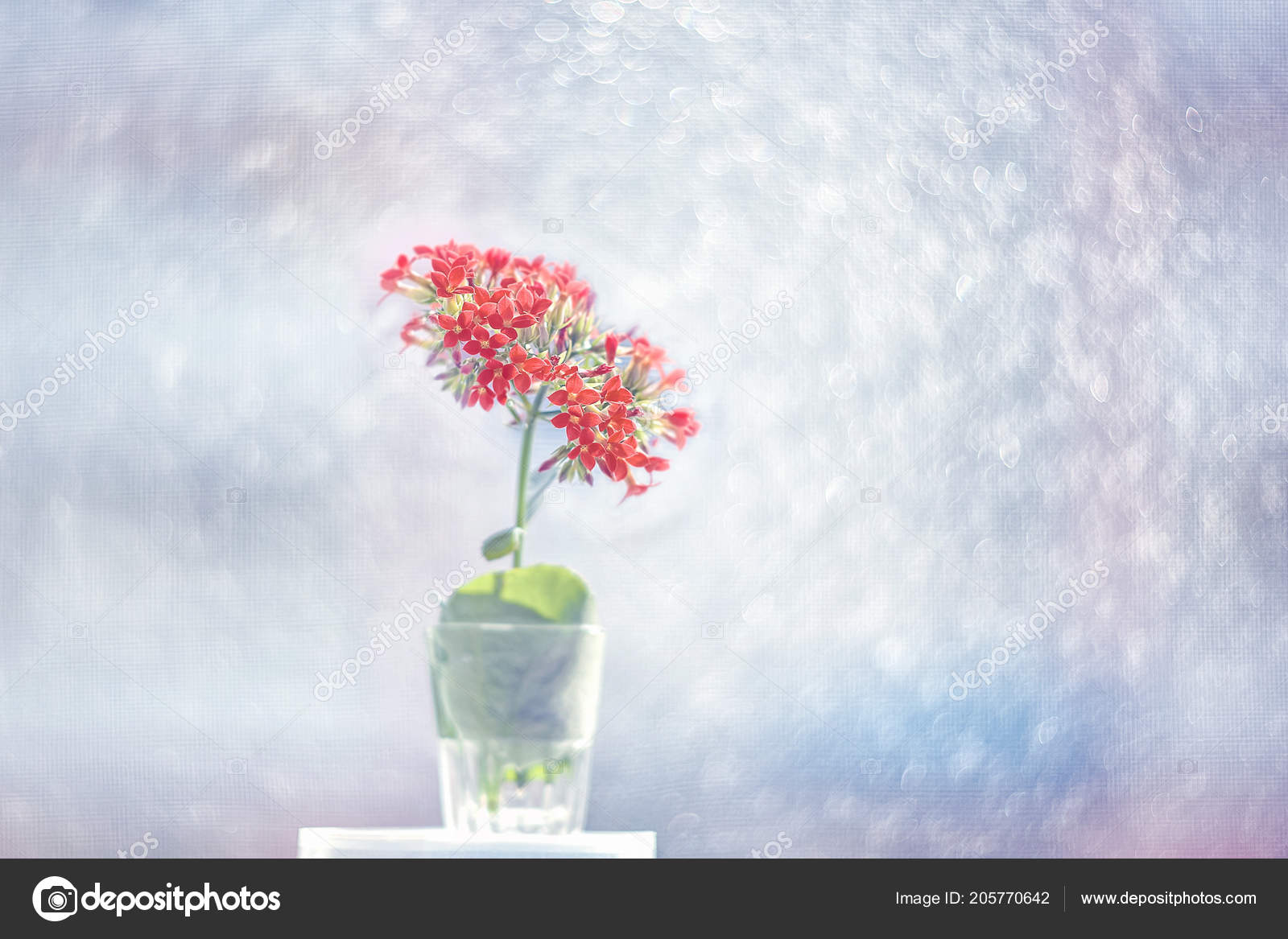 Small Pink Calanchoe Flowers Beautiful Artistic Background Sunny Day