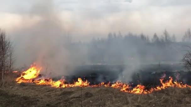 požár, lesní požár, požár pole,