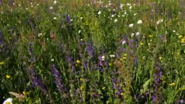 Biologická rozmanitost na jarní louce - mnoho druh divoké květiny kvetoucí, ekologie koncepce, closeup
