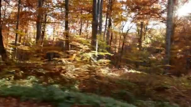 Pohybuje se rychle přes podzimní les, slunce svítí nad větví