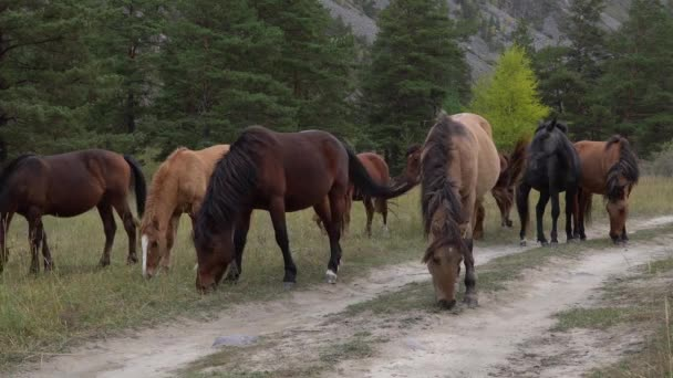 Whild koně pasoucí pastviny na otevřeném poli vedle lesů za slunečného dne.