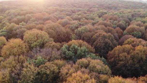 Vista aerea della foresta di autunno variopinto, boschi di querce, tramonto