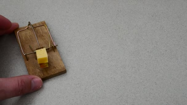Peace of cheese in mouse trap