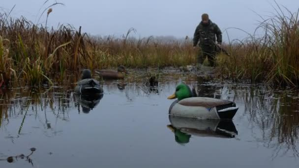 Hunter walk throut duck dummies in the water