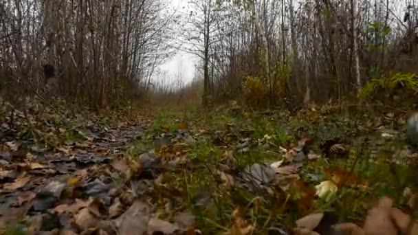 Comouflage fegyverrel vadász séta az erdőben