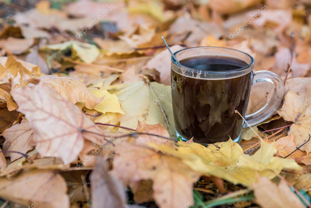 A cup of fragrant coffee in a transparent glass between the yellow autumn leaves