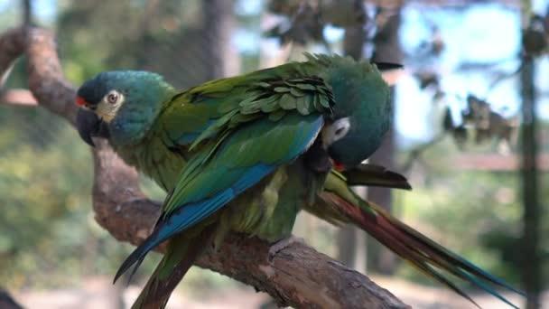 Zelený papoušek sedící na větvi v zoo